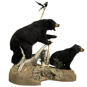 Life Size Black Bear Mount